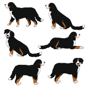 Training Pad Size For Bernese Mountain Dog